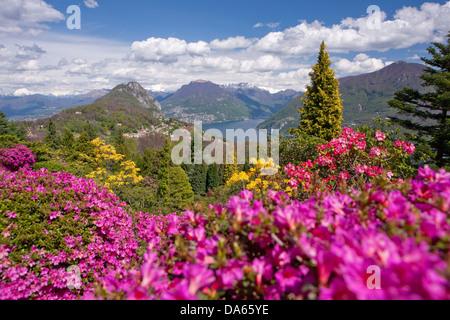 Blüte, Rhododendron, Parco San Grato, Carona, Kanton, TI, Ticino, Südschweiz, Blume, Blumen, park, Schweiz, Europ - Stockfoto