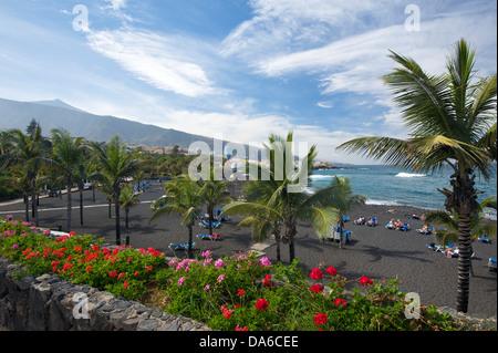 Teneriffa, Teneriffa, Kanaren, Kanarische Inseln, Spanien, Spanisch, Europa, Puerto De La Cruz, Playa Jardin, Palm - Stockfoto