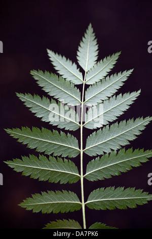 Pflanze mit grünen Blättern - Stockfoto