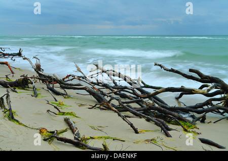 Totholz in der Brandung am Strand Ostsee, Deutschland, Mecklenburg-Vorpommern, Western Region Nationalpark Vorpommersche - Stockfoto