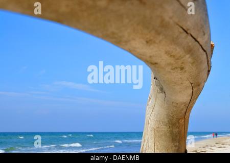 ein Stück Treibholz am Strand Ostsee, Deutschland - Stockfoto