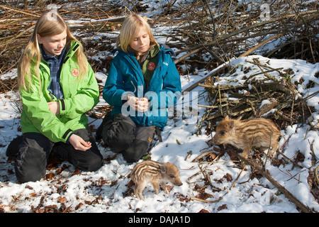 Wildschwein, Schwein, Wildschwein (Sus Scrofa), Kinder mit zwei verwaiste hatte in den winterlichen Garten, Deutschland - Stockfoto
