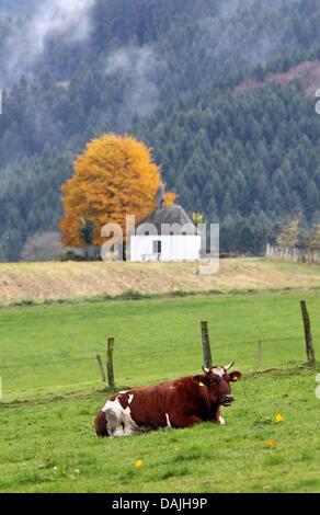 (Dpa Datei) Ein Archiv, datiert 6. November 2010, Bild eine Kuh auf einer Wiese in Sundern-Endorf, Deutschland liegen. - Stockfoto
