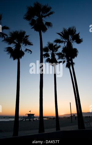 Palmen am Venice Beach bei Sonnenuntergang an einem warmen Tag in Los Angeles, Kalifornien, USA - Stockfoto
