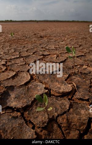Wüstenlandschaft in Sarigua Nationalpark, Herrera Provinz, Republik Panama. - Stockfoto