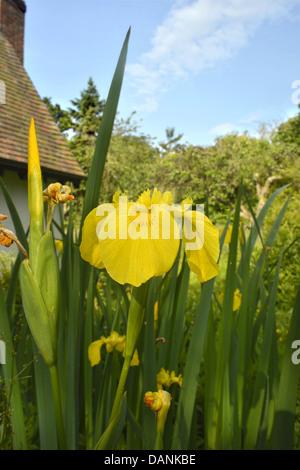 iridaceae stockfoto bild 147262227 alamy. Black Bedroom Furniture Sets. Home Design Ideas