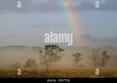 Ein Regenbogen und Morgen Nebel hat sich über die Wiesen am dänischen Bach Vejle Aa gebildet. - Stockfoto