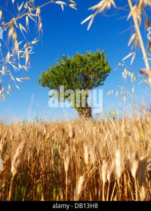 Mandelbaum, Provence, Frankreich - Stockfoto