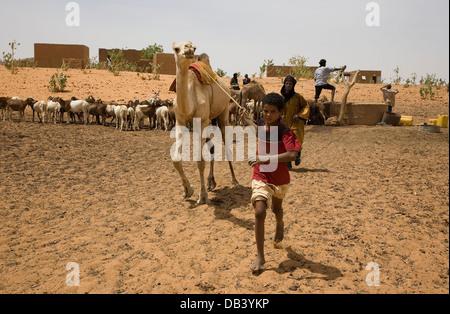 Tuareg-Hirten und junge im Dorf, die Verbindung mit einem Kamel, um ziehen Wasser aus einem Brunnen für die Tiere - Stockfoto