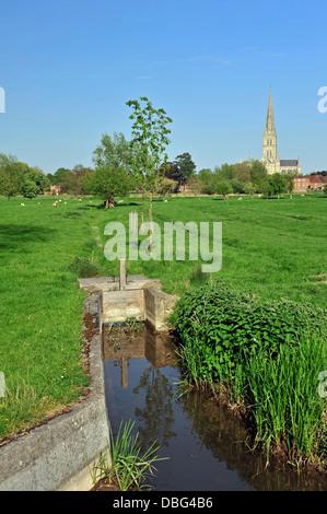 Kathedrale gesehen über Wiese, Salisbury (New Sarum), Wiltshire, England, Vereinigtes Königreich, West-Europa. - Stockfoto