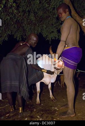 Bodi-Stamm Frau sammeln Blodd aus einer Kuh, Hana Mursi, Omo-Tal, Äthiopien - Stockfoto