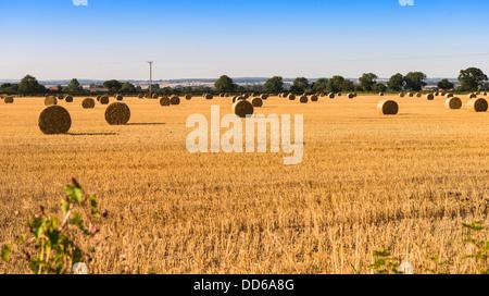 Heu-Kautionen in einem Feld in Pickering, North Yorkshire, UK - Stockfoto