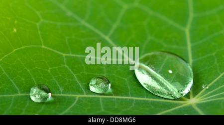 Wassertropfen auf grünen frischen Blatt Makro - Stockfoto