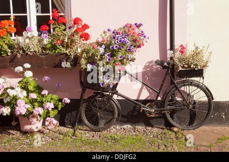 Fahrrad- und Blumen auf einem sonnigen rosa Wand in Dunster, Somerset UK - Stockfoto