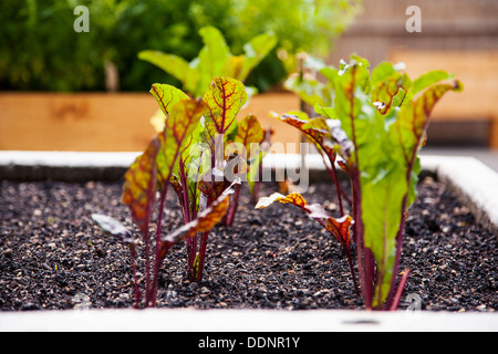 urban gardening frankfurt am main hessen deutschland europa stockfoto bild 60100924 alamy. Black Bedroom Furniture Sets. Home Design Ideas