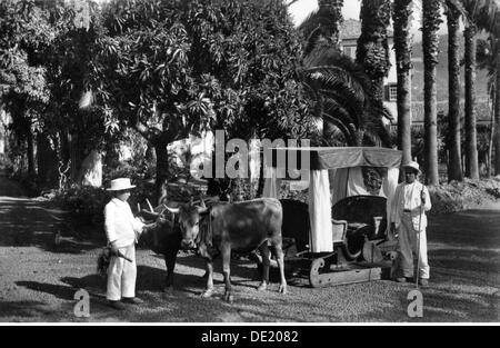 Geographie/Reisen, Portugal, auf der Insel Madeira, Menschen, Mann und Kind mit einem Ochsen Schlitten, Postkarte, - Stockfoto