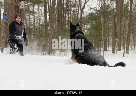 Ein Deutscher Schäferhund springt in mehreren Metern Schnee, Antizipation des Wurfes des Stockes, die der Mann hält. - Stockfoto