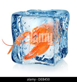 Langusten Sie in Eiswürfel isoliert auf weißem Hintergrund - Stockfoto