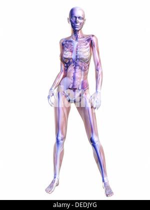 Anatomie des Menschen - Stockfoto