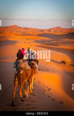 Touristen auf Kamelsafari, Sahara Wüste, Merzouga, Marokko, Nordafrika, Afrika - Stockfoto