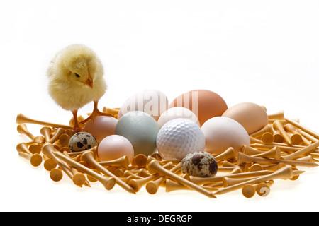 Anderen Küken stehen auf Eiern und Golfball - Stockfoto