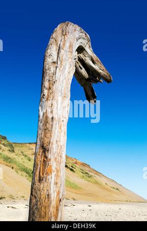 Riesiges Stück Treibholz errichtet am Strand Long Beach Nook, Truro, Cape Cod, Massachusetts, USA - Stockfoto