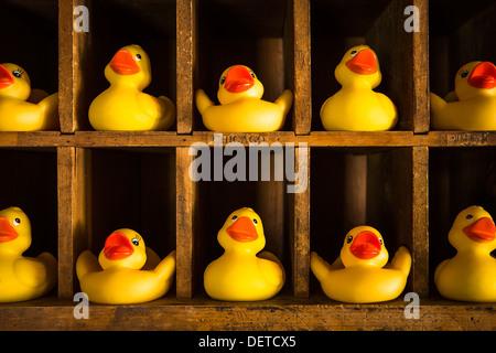 """Dieses Bild drückt das Konzept der """"bekommen Ihre Enten in einer Reihe"""". - Stockfoto"""