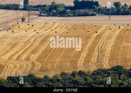 Frisch geerntete Felder mit Heuballen, an der Grenze von Bedfordshire Buckinghamshire - Stockfoto