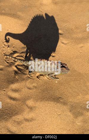 Namaqua Chamäleon (Chamaeleo Namaquensis), Namib-Wüste, Namibia, April 2013 - Stockfoto