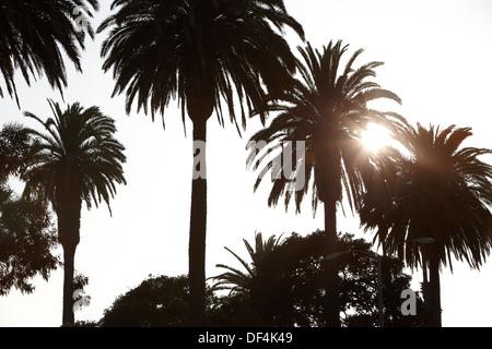 Palmen, Bäume, Venice Beach, Los Angeles, Kalifornien, USA - Stockfoto