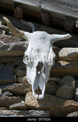Kuh Schädel auf einem Berg Hütte, Seewertal, Ötztaler Alpen, Provinz Südtirol, Trentino-Alto Adige, Italien - Stockfoto