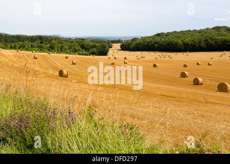 Große Runde Strohballen auf abgeernteten Feld in Burgund, Frankreich - Stockfoto