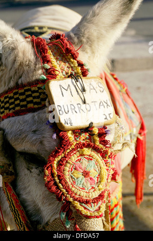 Esel-Taxi in das Dorf von Mijas Mijas Malaga Spanien - Stockfoto