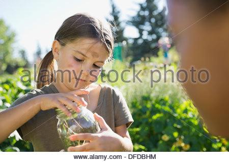 Kleines Mädchen fangen Bugs im Gemeinschaftsgarten mit Glas - Stockfoto