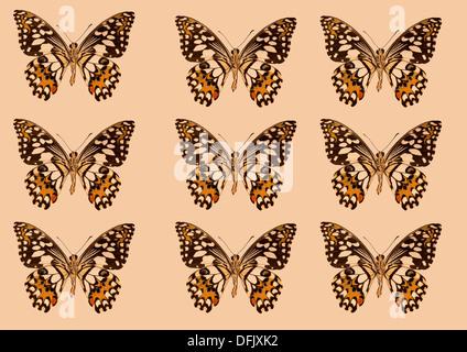 """""""Papilio Demoleus Kalk Schwalbenschwanz"""" Schmetterlinge - Stockfoto"""