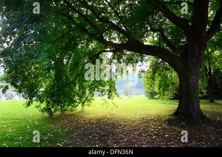 saisonale Bild mit Park und Ahorn Baum im Gegenlicht - Stockfoto