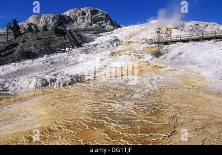Elk265-1764 Wyoming, Yellowstone-Nationalpark, Mammoth Hot Springs, Minerva Terrace mit Promenade - Stockfoto