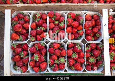 Erdbeeren auf dem Abwürgen, Hannover, Niedersachsen, Deutschland, Europa, - Stockfoto