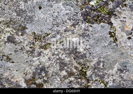 Die Struktur des natürlichen Stein grau Granit durchsetzt mit Moos und Rasen - Stockfoto