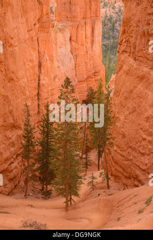 Bryce Canyon Navajo Loop Trail, Bryce-Canyon-Nationalpark, Utah, USA - Stockfoto