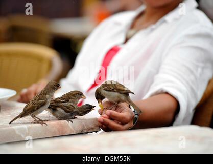 Frau, Fütterung Spatzen in einem Restaurant, Berlin - Stockfoto
