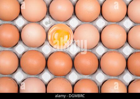 Einziges Ei aufgebrochen zwischen anderen Eiern auf einem Eierbehälter, Deutschland