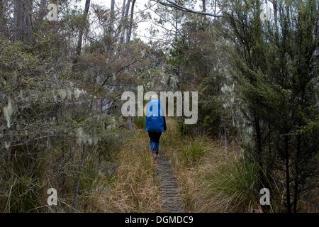 Wanderer zu Fuß auf einem Holzsteg, Lake Manapouri, Fiordland, Südinsel, Neuseeland - Stockfoto