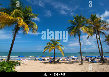 Strand mit Palmen in San Juan, Puerto Rico, Karibik - Stockfoto