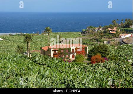 Bananenplantagen in Orotava, Teneriffa, Kanarische Inseln, Spanien, Europa - Stockfoto