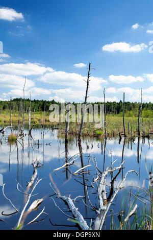 Tote Bäume und Wolken spiegeln sich in das Wasser des Schwenninger Moos Moor, Baden-Württemberg - Stockfoto