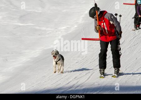 Mann auf einer Taste Aufzug mit seinem Hund laufen neben ihm, Pillerseetal-Tal, Jakob i. H., Tirol, Österreich, - Stockfoto