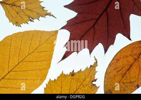 Verschiedene Blätter in Herbstfärbung - Stockfoto