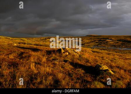 Abendlicht auf die hardangervidda, Hardanger vidda, plateaufjell und Europas größte Hochebene, Norwegen, Europa - Stockfoto