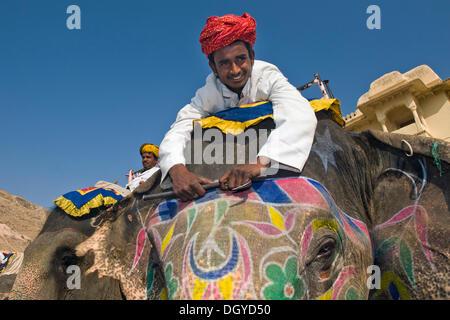 Mahout oder Elefanten-Treiber auf einem lackierten Elefanten, Amer Fort oder Amber Fort, Jaipur, Rajasthan, Indien, - Stockfoto